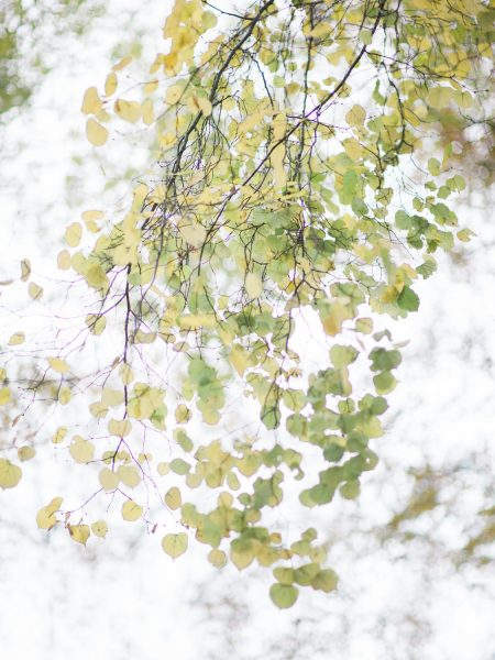 Delicate green leaves Autumn wedding Rhinefield House