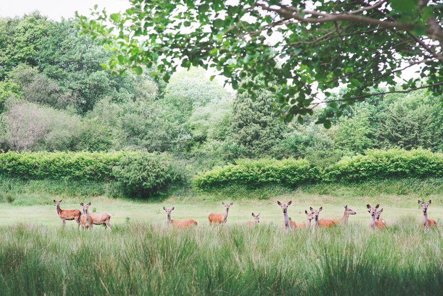 Fine Art fuji400h film portrait of wild deer in long trees looking at camera for Tara Bradley-Birt bridal fashion shoot