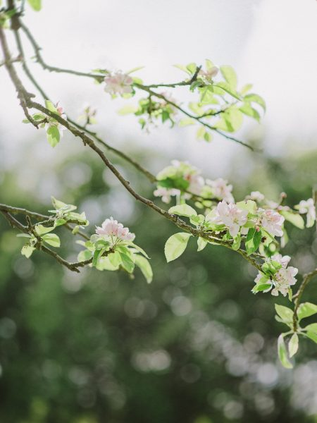 Apple Blossom close up on engagement LOVE shoot in West Sussex