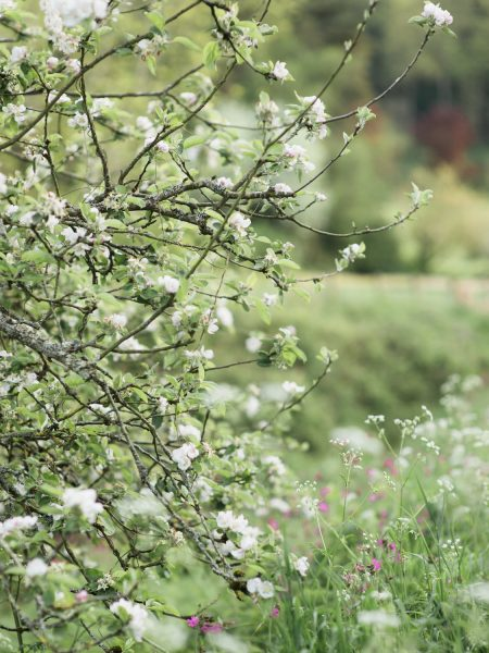 Pastel engagement shoot tree of blossom English West Sussex countryside