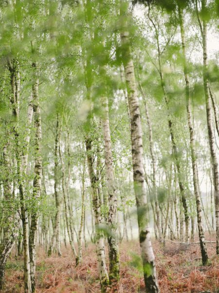 Fine Art Boho forest shoot with silver birch forest