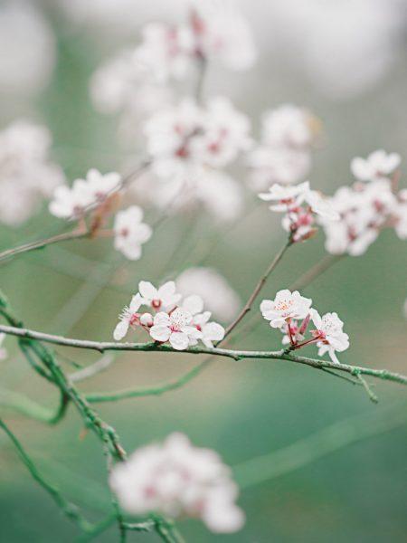 Love shoot engagement shoot pink cherry blossom London