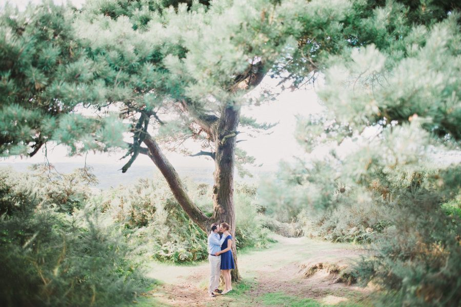 Fine Art engagement shoot of a couple under large pine tree against a backdrop of woodland in Ashdown forest