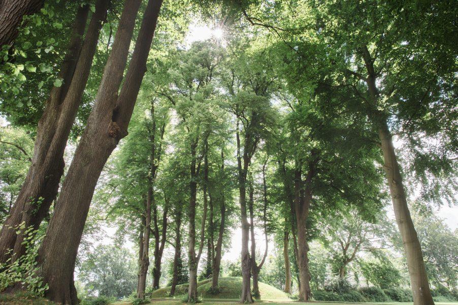Landscape of Sølyst forest Copenhagen København