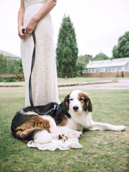 Portrait of wedding dog with bride from the waist down holding a leash Studland Bay Dorset