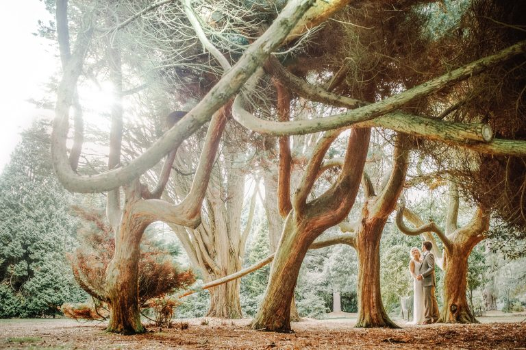 Wide landscape of Bride and Groom in brown tweed suit happily dancing under a a scene of three dramatic twisted red hued yew tree in Studland Bay Dorset