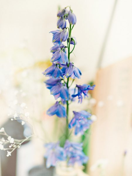 Rustic marquee wild meadow blue wedding flower Studland Bay Dorset